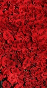 rose-374318_1920-e1513526497580.jpg